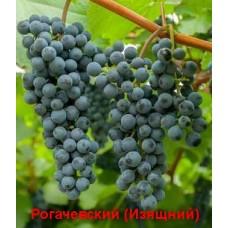 Рогачевский (Изящный)