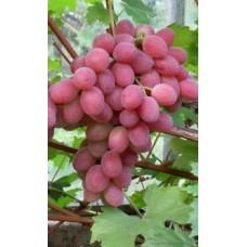 Рубиновый юбилей