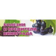 Как лечить болезни  и избавиться от вредителей винограда